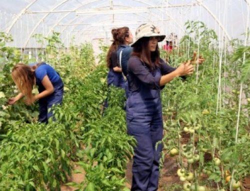 Δημοσιεύθηκε η 2η πρόσκληση του προγράμματος Νέων Αγροτών